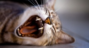 yawning cat pet friendly landlords Pendo blog